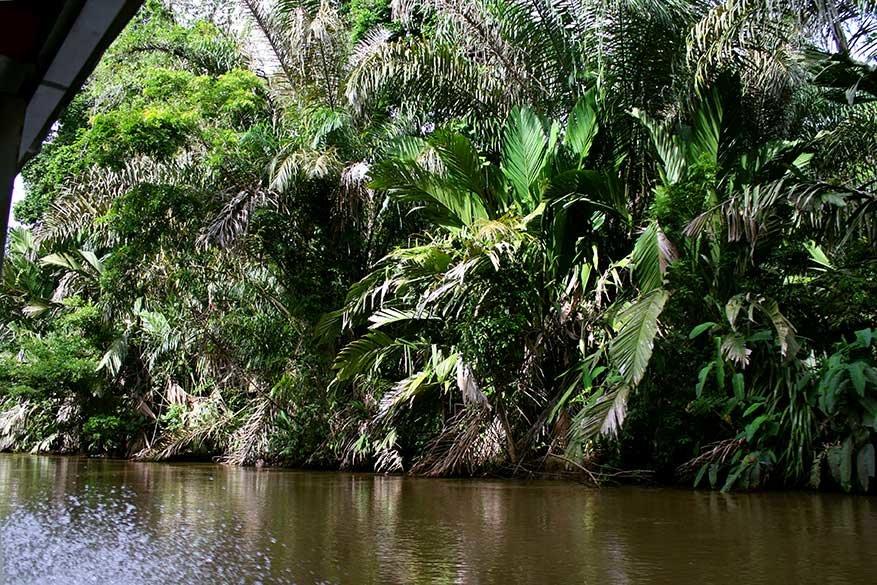 De boottocht naar Tortuguero was een safari op zich.