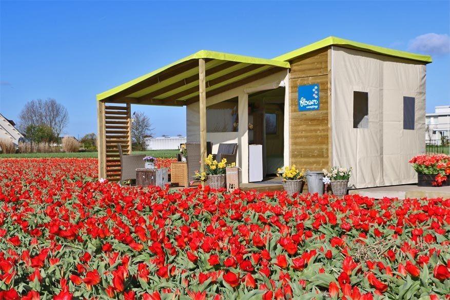 Logeertip: Frans glampen tussen de Hollandse tulpen