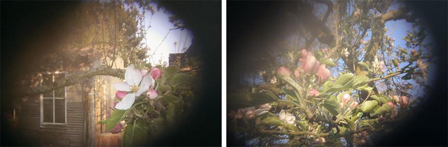 Bloemen fotograferen met een eigen gaatjescamera!