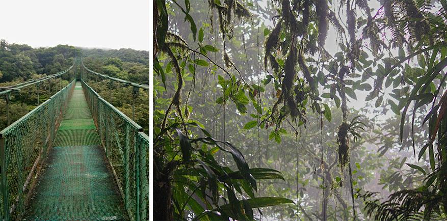 Je hebt het gevoel dat je op de top van de wereld staat in Monteverde Cloud forest.