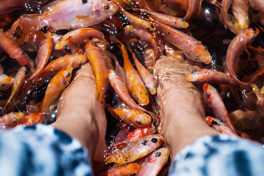 Kleine visjes eten maar al te graag de dode huid van je voeten. © Pixabay