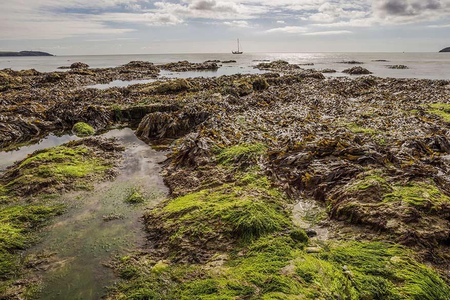 Zeewier heeft volgens de Ieren een helende werking. © Pixabay