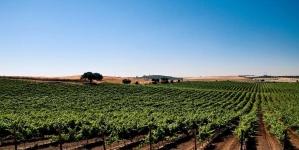 Op culinaire expeditie in de Portugese Alentejo