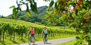 In de Duitse Pfalz spreken de stenen en rijpt de wijn