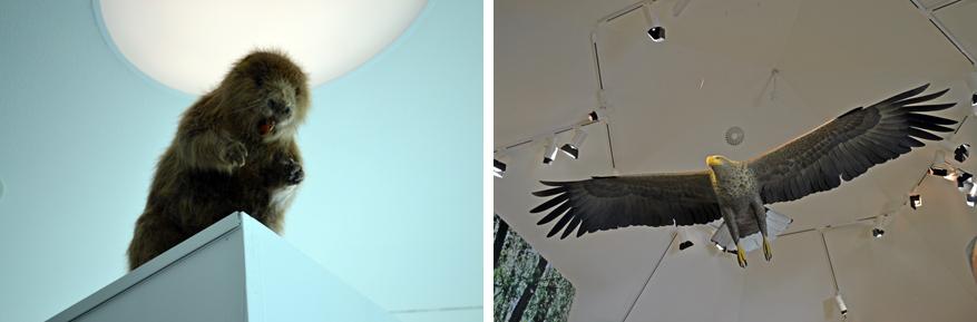 De bever hebben we niet in het echt gezien, maar kunnen we bewonderen in het museum.
