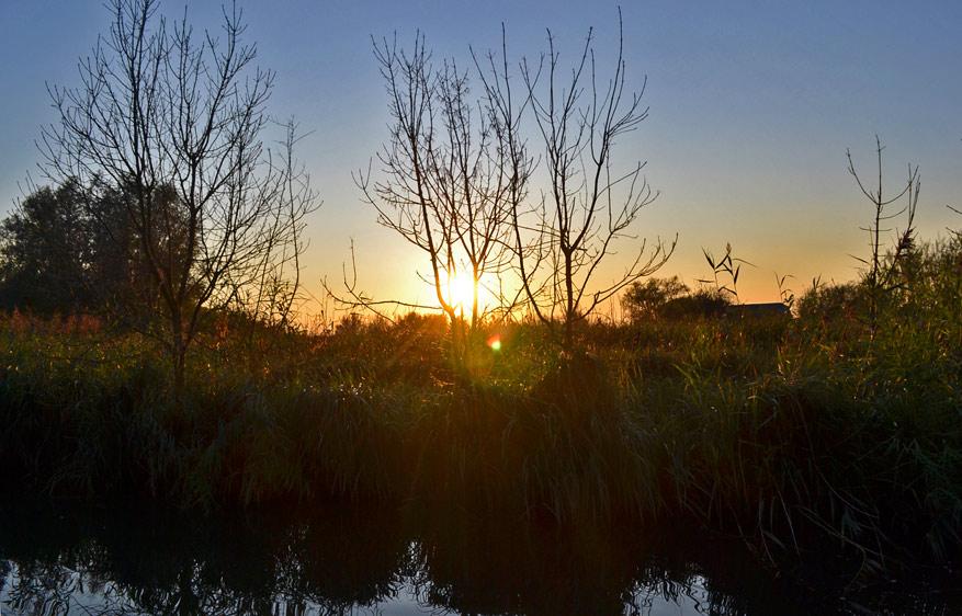 De Biesbosch biedt een rijk ongetemd stuk natuur in Nederland.