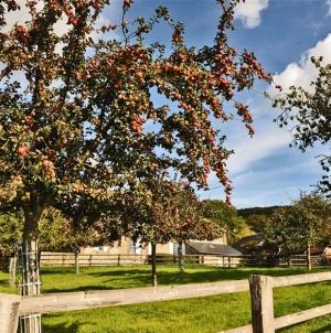 Van appel tot aperitief: de beste cider rijpt in Pays d'Auge
